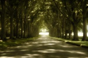road_to_wisdom